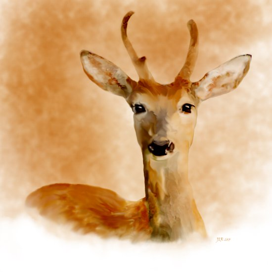 Young Stag Canvas Print