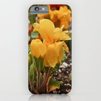As Winter ends iPhone 6 Slim Case