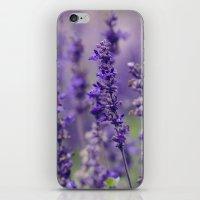 Lovely Lavender iPhone & iPod Skin