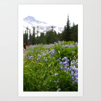 Meadow Art Print