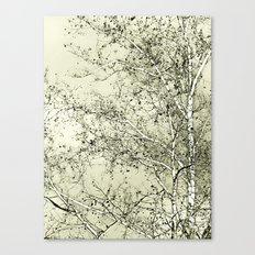 Sycamore Tree, Inky Green Toile Version Canvas Print