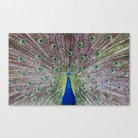 Peacock Fan Canvas Print