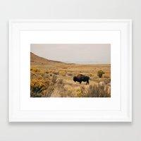 Bison Bull On Antelope I… Framed Art Print