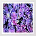 hydrangeas nature 2 Art Print