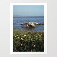 Shell Beach California Art Print