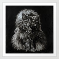 Who's for Dinner? Big Black & White Main Coon Cat Art Print