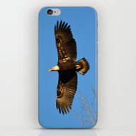 Bald Eagle Soaring Over iPhone & iPod Skin