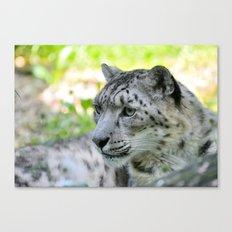 Snow leopard (Irbis)  Canvas Print