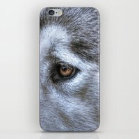 Eye of the dog iPhone & iPod Skin