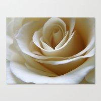 Yellow Roses #21 Canvas Print