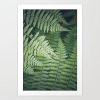 Where the Redwood Fern Grows Art Print