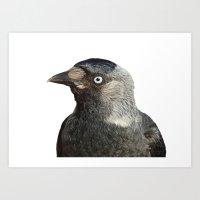 Jackdaw (Corvus Monedula… Art Print