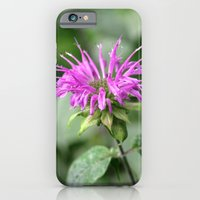 Monarda - Bee Balm iPhone 6 Slim Case