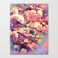 Kirschblüten #1 Canvas Print