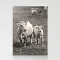 White Cows - Sepia Stationery Cards