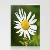 Wild Daisy Stationery Cards