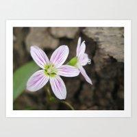 Forest Flowers Art Print