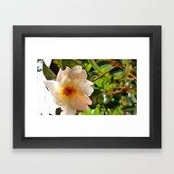 CamelliaWhite1 Framed Art Print