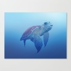 Turtle! Canvas Print