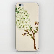 Gyoi-ko or Robe Yellow Cherry Blossoms iPhone & iPod Skin