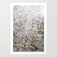 Mallard Ducks Art Print