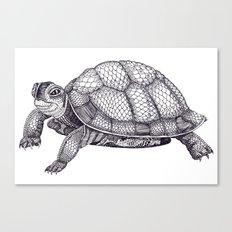 Turtle Pattern Canvas Print