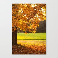Golden Maple Fall  Canvas Print