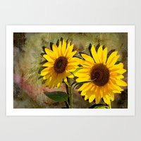 SUNFLOWERS, Double Sunshine Art Print