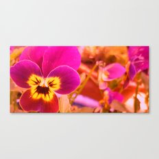 Violaaaa Canvas Print