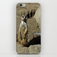 The Most Interesting Meerkat in the World iPhone & iPod Skin