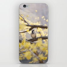 Spring Bird iPhone & iPod Skin
