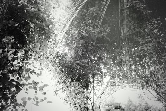 Canopy - Black & White Art Print