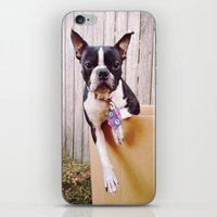 Packed For Shipping iPhone & iPod Skin