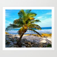 Mexican Palm Art Print