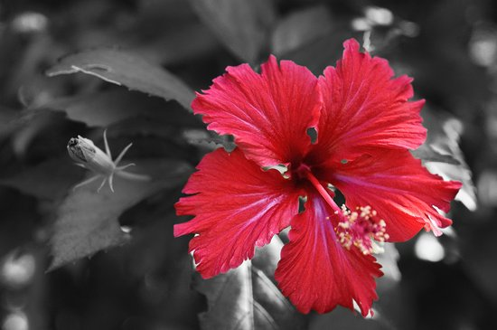 Color my Garden Red Art Print