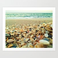Shore and Shells Art Print