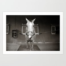 Horsin' around Art Print