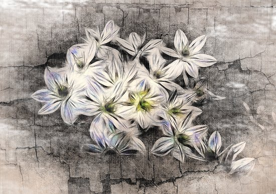 Allium Greys Art Print