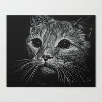 Wide Eyed Cat Canvas Print