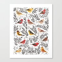 Finches of North American Field Guide Canvas Print