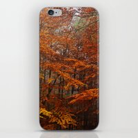 Orange Leaves Trees Forest Color Photo iPhone & iPod Skin
