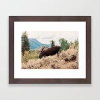 Moose 2 Framed Art Print