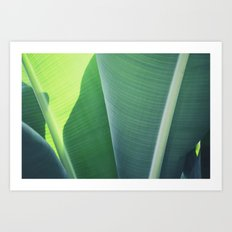 Plantain #1 Art Print
