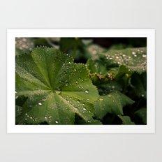 Droplets II Art Print