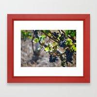 Grapes on the Vine. Framed Art Print