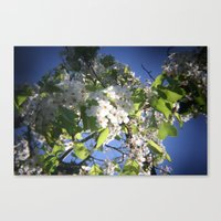 blossoms on vermont Canvas Print