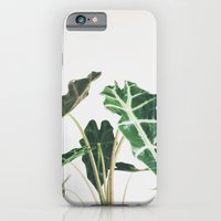 Elephant Ear iPhone 6 Slim Case