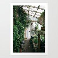 Old Greenhouse Art Print