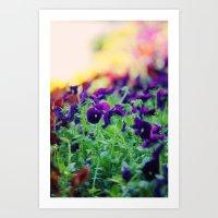 Rainbow Of Flowers Art Print