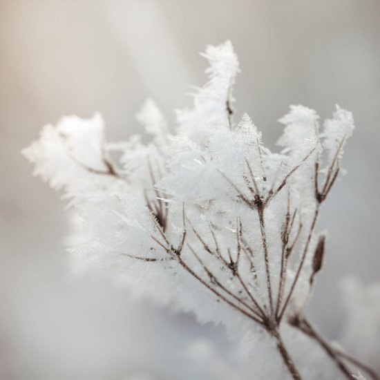 Winter macro Canvas Print